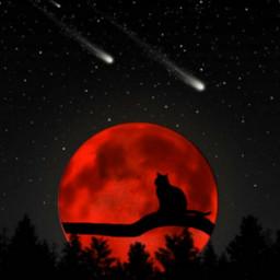 freetoedit moon catblack redmoon pinetree dayofthedead stickersfreetoedit irchalloweencat
