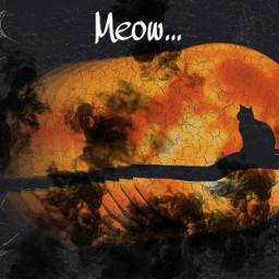 freetoedit irchalloweencat halloweencat
