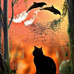 freetoedit irchalloweencat bcat dolphins sunset