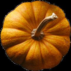 pumpkin fall challenge freetoedit