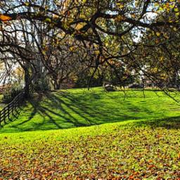 photography nature colorful season fall freetoedit
