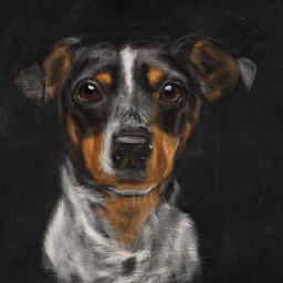 colorpaint draw drawing digitalart dog