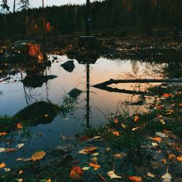 interesting nature fall wet evninghiiking