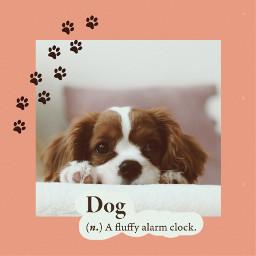 freetoedit dog pets puppy dogs