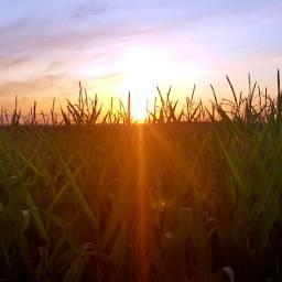 france campagne lotetgaronne sun soleil pcbluehour