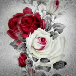 freetoedit beatiful backround redrose whiterose
