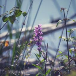 flower blossom nature inthefield