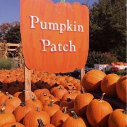 halloween halloweentime autumn pumpkin lifestyle