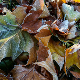 freetoedit frost frosted autumnleaves leaves