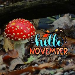 freetoedit hellonovember autumn toadstool photography
