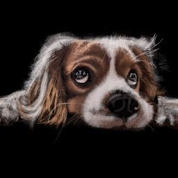 colorpaint draw dog eyes portrait