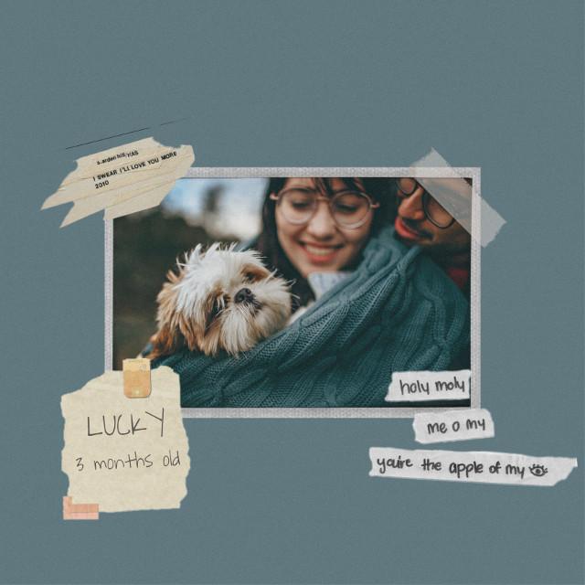 #freetoedit #tape #template #pet #petlove #frame #love