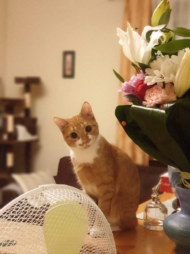 Cat&flowers