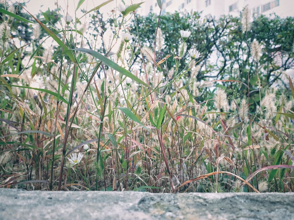 #freetoedit  #nature #grass #foxtail #green #yellow