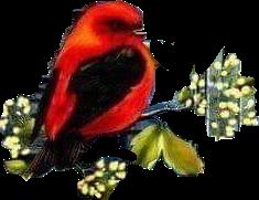 #flowers #branches #bird #petsandanimals #freetoedit