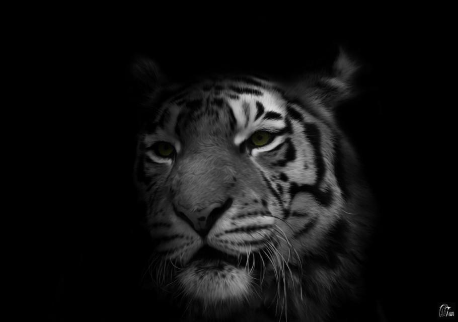 #tiger #blackonblack #freetoedit