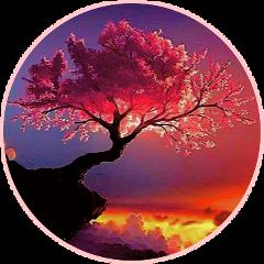 tree pretty pink sunset freetoedit sctreesilhouette treesilhouette
