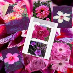challenge aestheticflower pink freetoedit