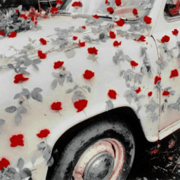 aesthetic car roses flowers antique freetoedit