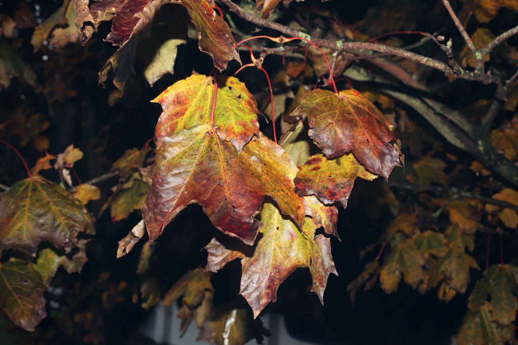 Just liked these leaves #nature #leaves #colourful #freetoedit