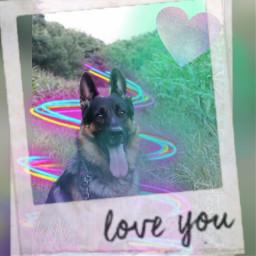herman duitseherder lovedogs dog freetoedit
