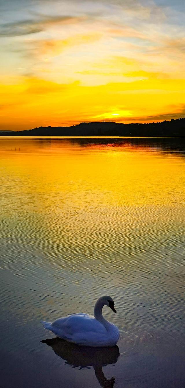 #sol#pordosol#lake