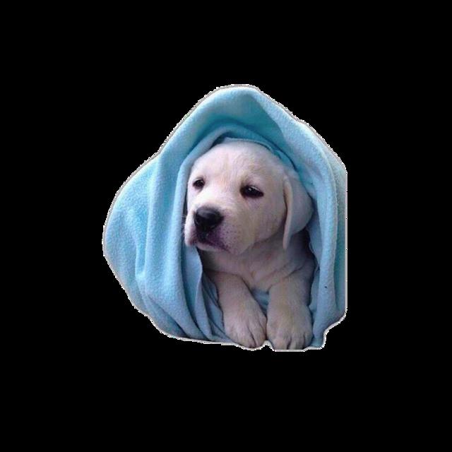 #puppy #cute #nichememe #faiandfai #freetoedit