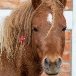 photography photooftheday petsofpicsart petsandanimals horse freetoedit