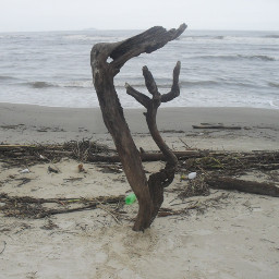 lagunabeach beach travelphotography driftwoodbeach greysky
