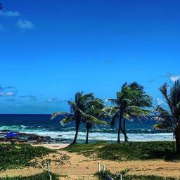 freetoedit prsia mar sol palmeiras