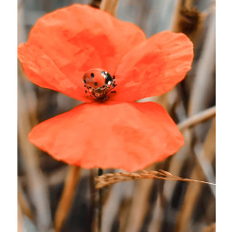 freetoedit red flowers ladybug