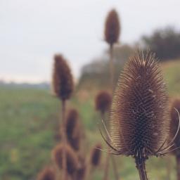 nature wildflower countryside outandabout freetoedit