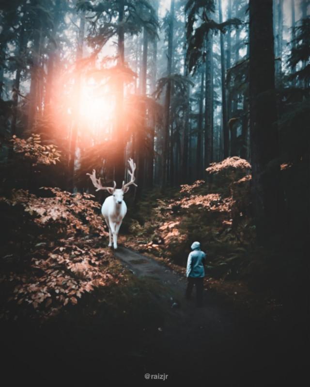 Forest of white deers.   #picsart #madewithpicsart #editing #art #stepbystep #visual #visualart #surreal #surrealart #lightroom #moodybrown