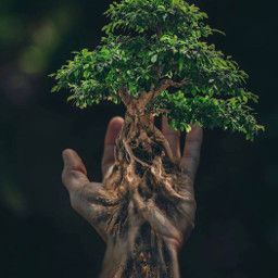 treeoflife surreal treeart