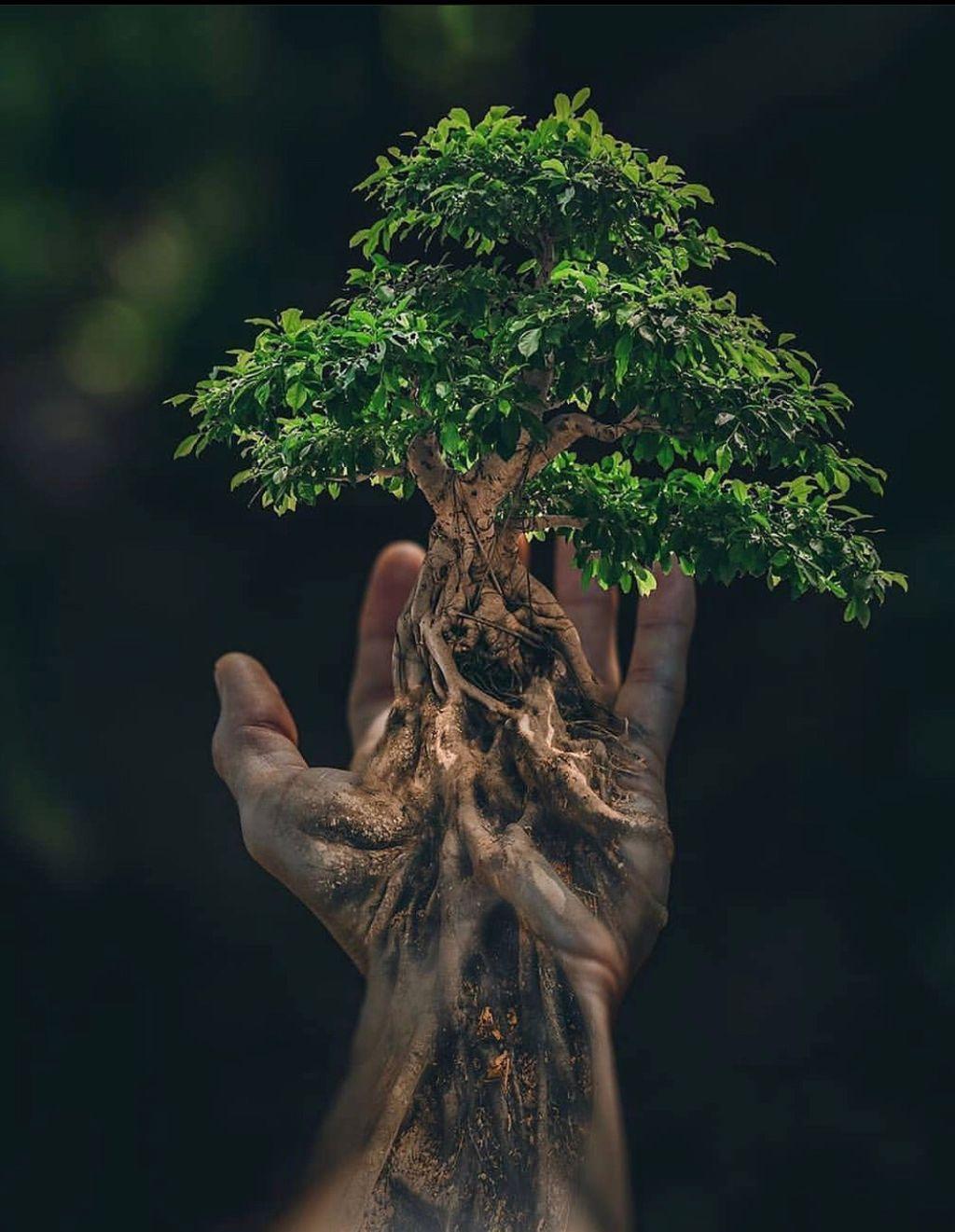 #treeoflife #surreal #treeart