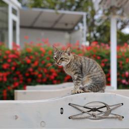 freetoedit catsofpicsart cat catsphotography photooftheday