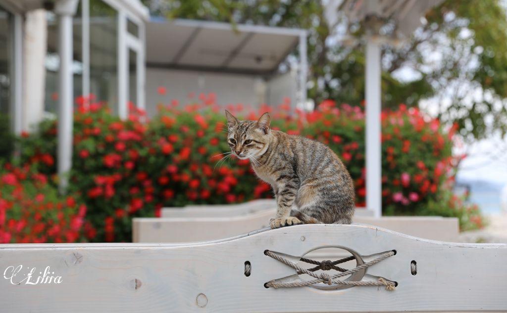 #freetoedit #catsofpicsart #cat #catsphotography #photooftheday