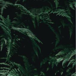 nature woodswalking ferns greenleaves deepinthewoods freetoedit