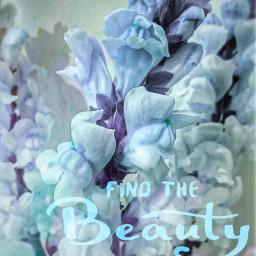 flowers hue blueflower funwithediting lifeisbeautiful freetoedit