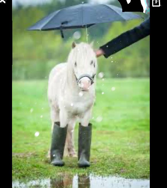 #ponies #freetoedit