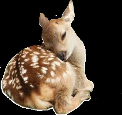 #deer #freetoedit