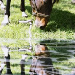 freetoedit horse gibby pony