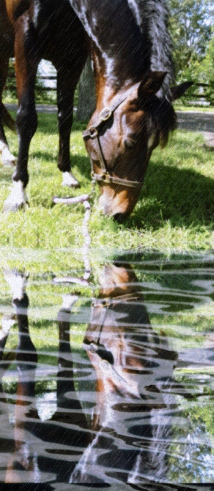 #freetoedit #horse #gibby #pony