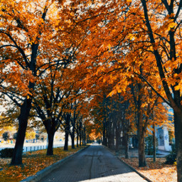 myphotography nature trees fall autumn picoftheday background blurry photography freetoedit