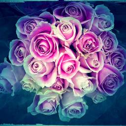 freetoedit roses bouquet flowers