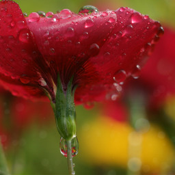 flowers raindrops closeup colorful naturephotography