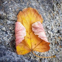 mywayhome found leaf ground autumnfeels freetoedit
