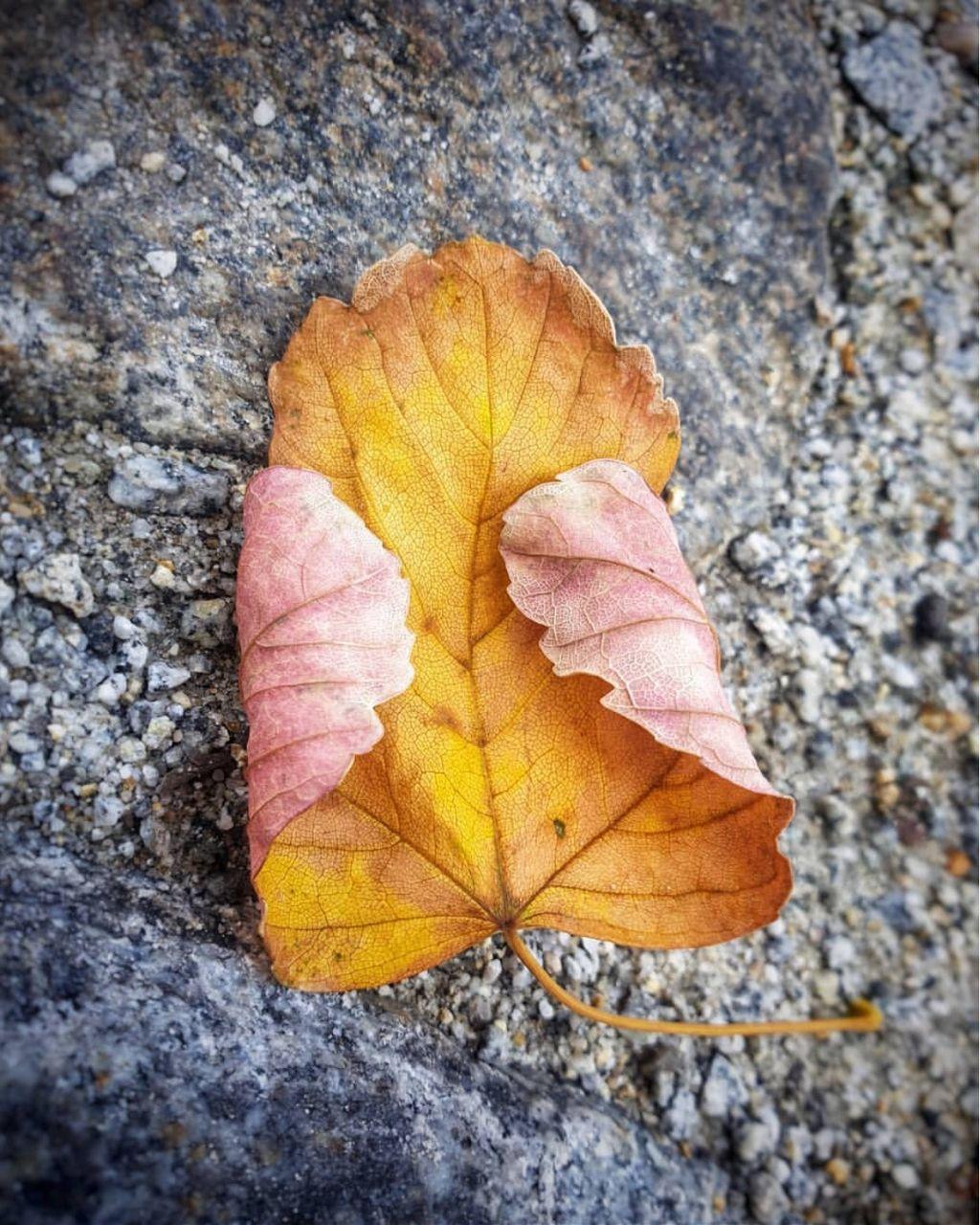 Self hug...                                                                                   On #mywayhome I #found a #leaf on the #ground #autumnfeels #autumnvibes 🍂 #textures #grungerextures #texturesinnature #minimal #urbannaturephotography                                                                #freetoedit