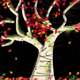 silverbirch tree autumn fallleaves dcalonelytree alonelytree