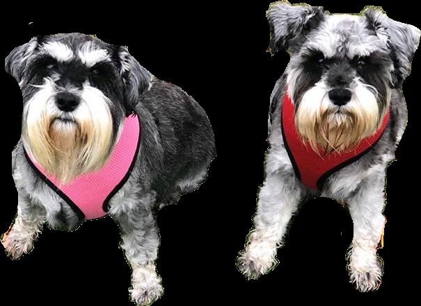 #doggies #freetoedit